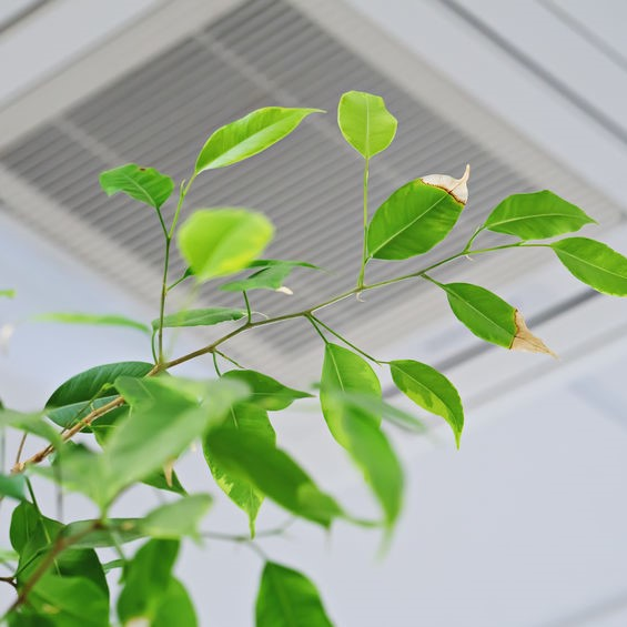plants in good indoor air quality